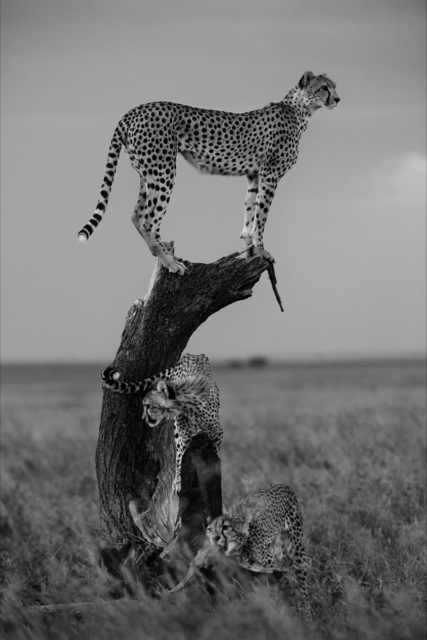 , 'Untitled,' , Fotospot