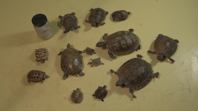 , 'Turtles (taking care) #2,' 2014, Meislin Projects