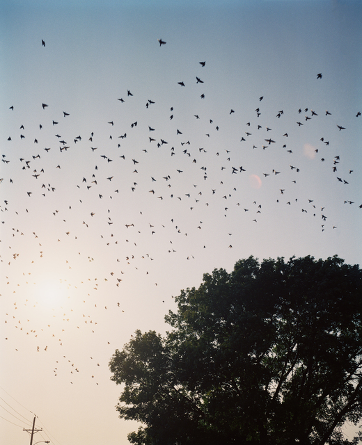 , 'Starlings, Omaha, NE,' 2005-2018, Huxley-Parlour