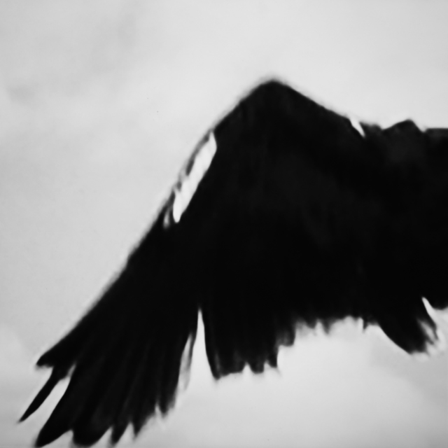 , 'Study of Birds series,' 2018, PontArte