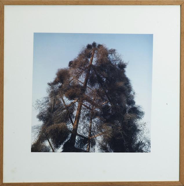 , 'Tumbleweeds Catcher, 1972,' 1986, Galleria Giovanni Bonelli