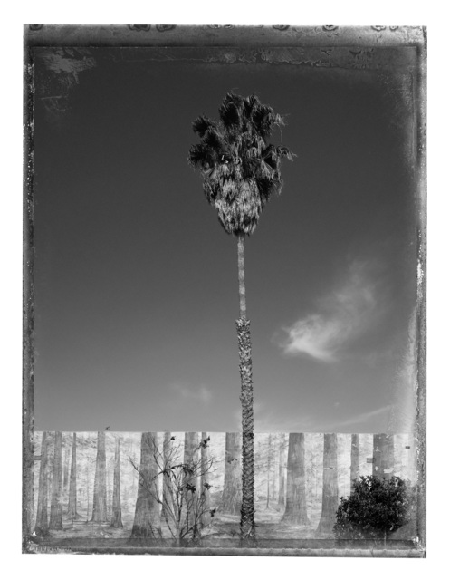 Christopher Thomas, 'Palm Tree', 2017, Photography, Pigment print on Aquarelle Arches paper, Galerie XII