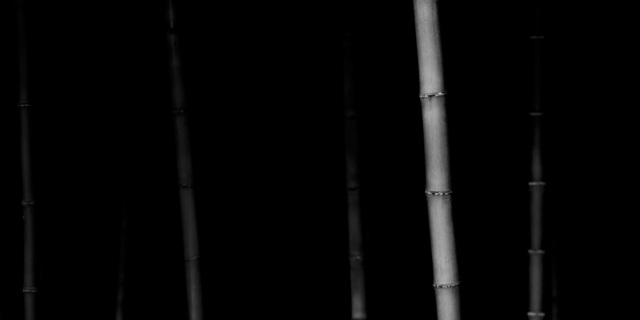 Choi Byung-Kwan, 'Bamboo Panorama #5', 2010, ElliottHalls