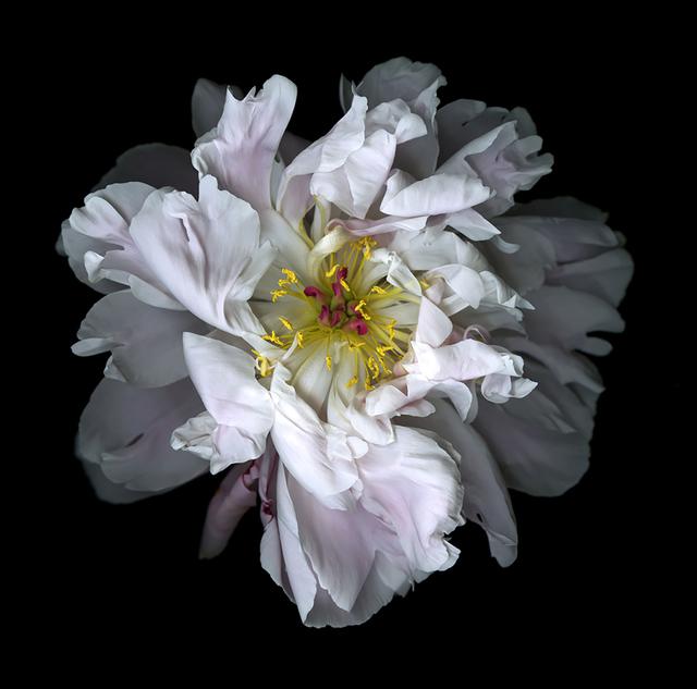 Katinka matson white flowers eric buterbaugh gallery artsy peony 2015 eric buterbaugh gallery mightylinksfo