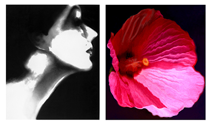 , 'Lisa Fonssagrives, Harper's Bazaar, circa 1950 and Flower 28 (Pink Mallow), 2006,' , Staley-Wise Gallery