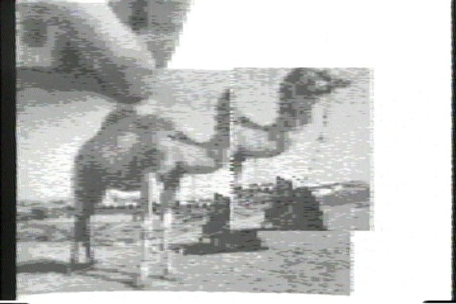 , 'Camel with Window Memory,' 1983, Vanessa Albury + Rachel Rampleman + Lynn Maliszewski