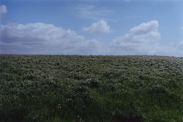 , 'Field,' 2015, Kerlin Gallery