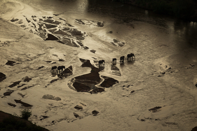 , 'A wild family crosses the Galana River that divides Tsavo National Park. One of the largest parks in Africa, Tsavo is a critical last stand habitat for wild elephants to walk the earth. Tsavo West National Park, Kenya.,' 2010, Anastasia Photo