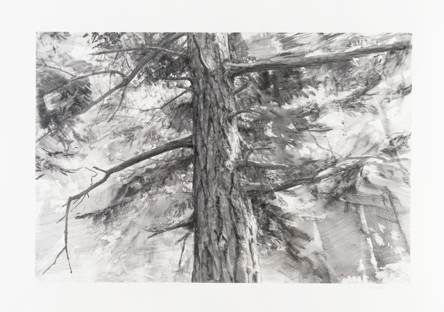 Michael Kareken, 'Tree Near Iceberg Point II', 2018, Highpoint Editions