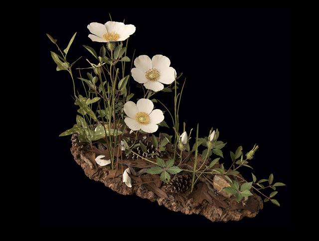 , 'Cherokee Rose,' 2019, Adelson Galleries