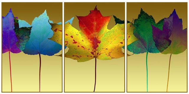 , 'Maple Leaf Triptych,' 2015, Florida Fine Art