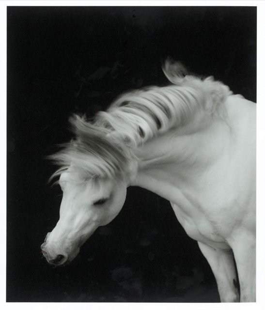 , 'Horse No. 01,' 1999, Cynthia Corbett Gallery