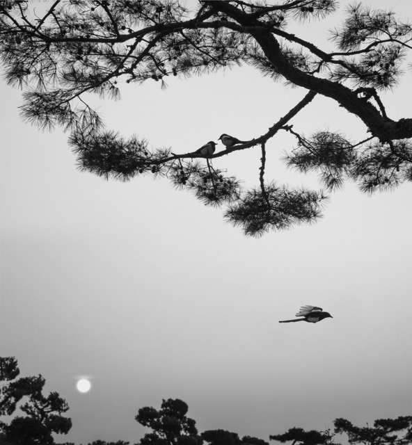 Pentti Sammallahti, 'Seoul, Korea (Three Birds)', 2016, Peter Fetterman Gallery