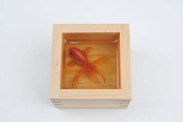 , 'Kingyo-sake Merry,' 2013, Joshua Liner Gallery