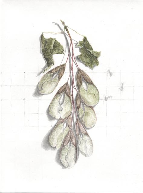 , 'maple seeds,' 2013, Artdepot