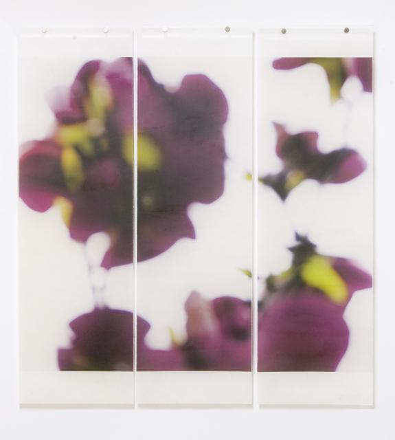 , 'Dark Magnolia, No. 4, 1/12,' 2016, Diehl Gallery