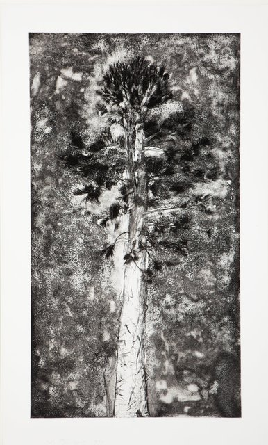 Jim Dine, 'The Pine in a Storm of Aquaint', 1978, Heritage Auctions