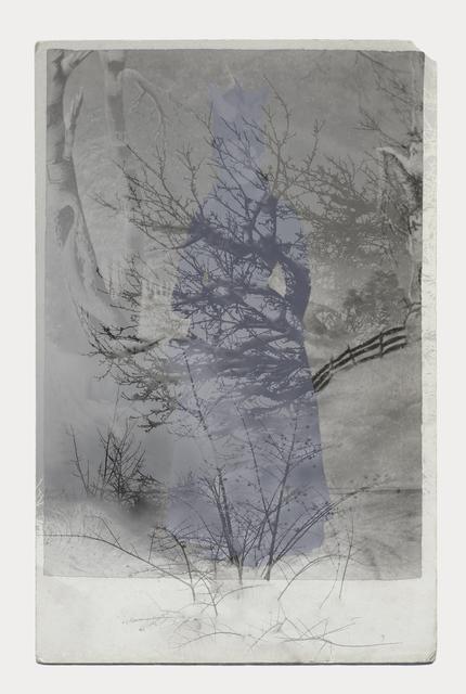 , 'Winter Forest,' 2016, Stephen Bulger Gallery
