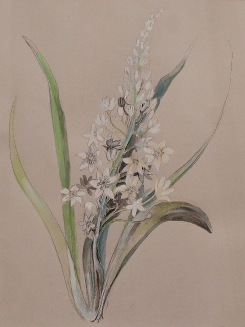, 'Floral Study, White Jasmine,' 2017, The George Gallery