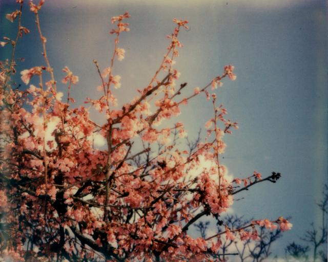 Julia Beyer, 'Cherry Blossom Skies II', 2014, Instantdreams