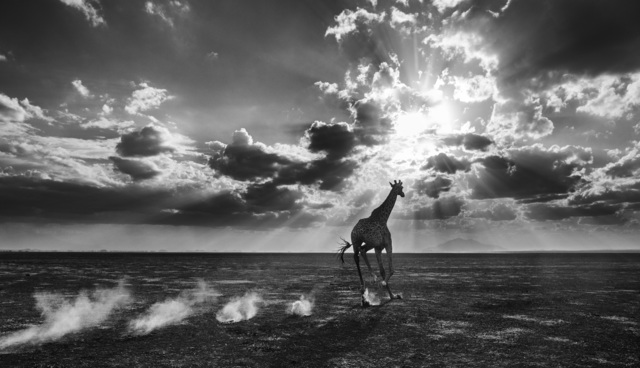 David Yarrow, 'Heaven Can Wait II', 2014, Photography, Archival Pigment Print, Hilton Asmus