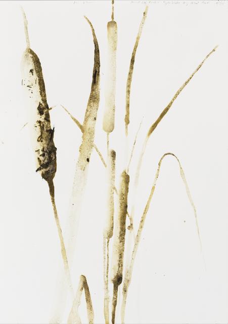 , 'Broadleaf Cattail (Typha latifolia),' 2014, Parrish Art Museum