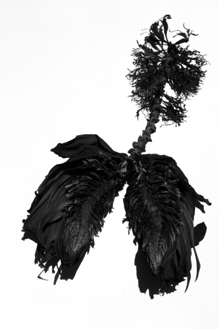 , 'Grief Is A Thing With Feathers, Smoke and Ashes Series, Luxor ,' 2017, Bridgeman Editions