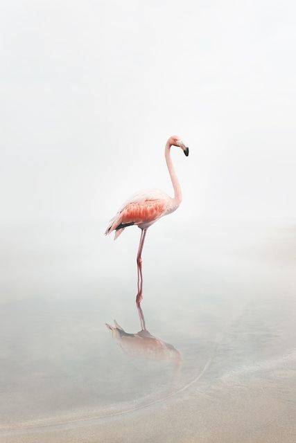 , 'For Now Flamingo ,' 2019, The Directed Art Modern
