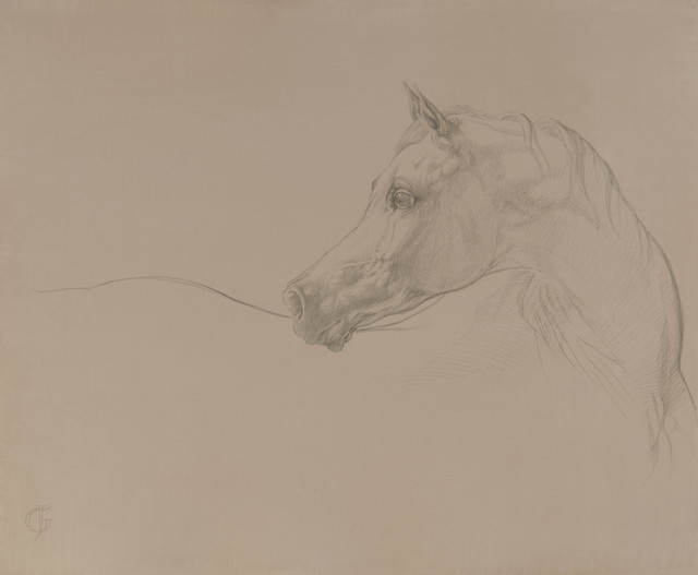 , '20. Arabian Looking Left I,' 2016, Sladmore Contemporary
