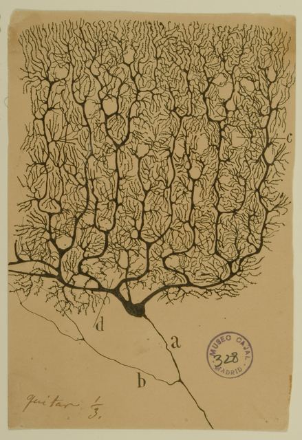 , 'Purkinje Cell of the Human Cerebellum,' 1899, Berkeley Art Museum and Pacific Film Archive