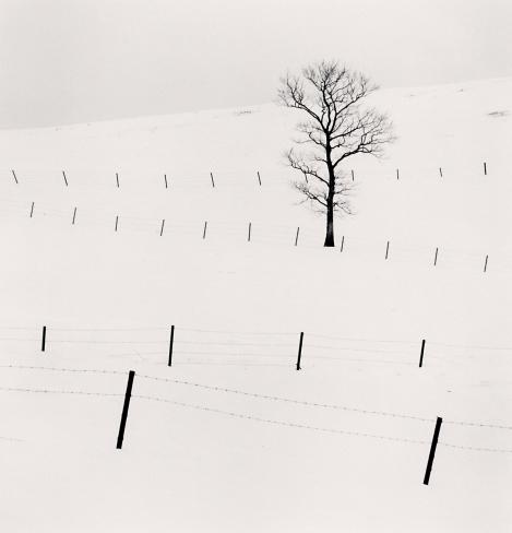Michael Kenna, 'Tree and Twenty Eight Posts, Teshikaga, Hokkaido, Japan', 2013, Weston Gallery