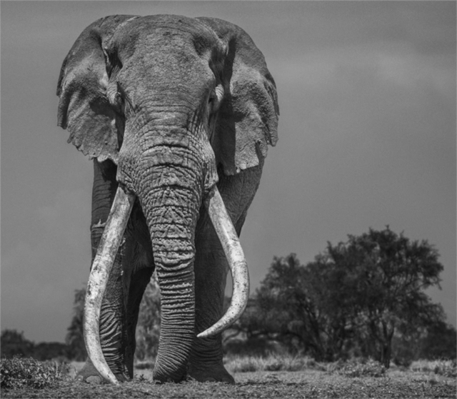 David Yarrow, 'Colossus', 2018, Photography, Archival Pigment Print, Hilton Asmus