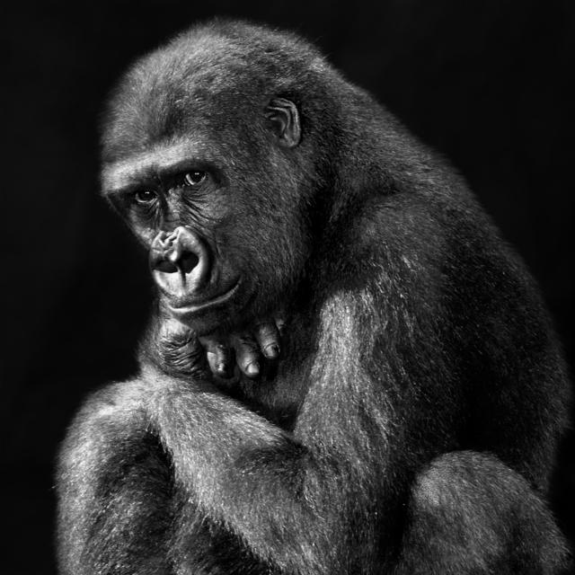 , 'Serie Primates, 2/25,' 2013, N2 Galería