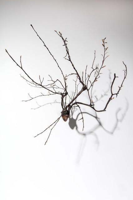 Javier Pérez, 'Brotes I', 2017, KETELEER GALLERY