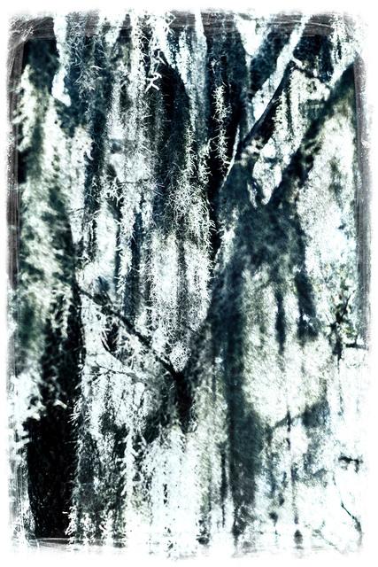 , 'Hidden Oak,' 2014, Nomad Two Worlds Gallery