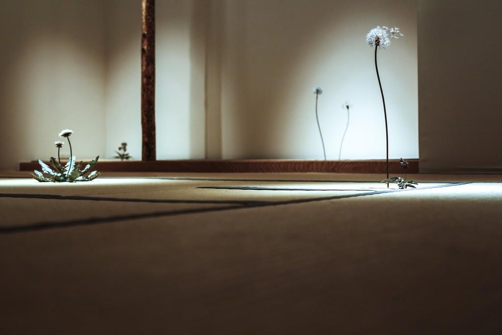 Photo by Hitomi Sato