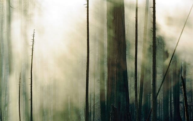 , 'Wildfire #3 Moonlight Fire, Plumas National Forest, CA ,' , Front Room Gallery