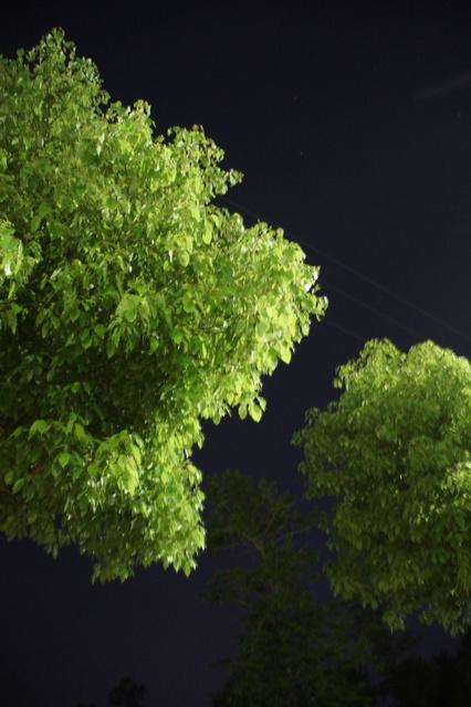 , 'Tree 2 树2,' 2017, PIFO Gallery