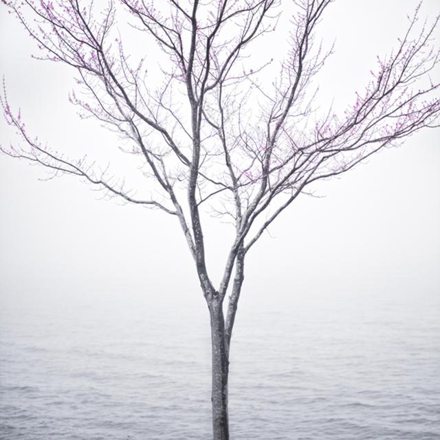 Cig Harvey, 'Spring Tree in Fog, Lincolnville Maine', 2012, Kopeikin Gallery