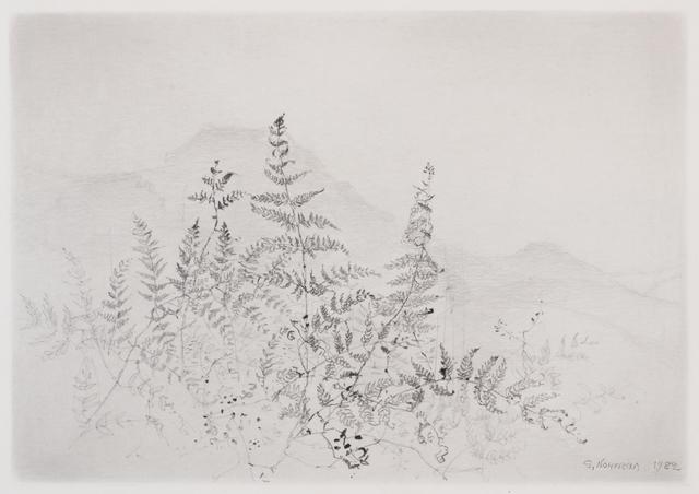 , 'Ormbunkar (Ferns),' , Pucker Gallery