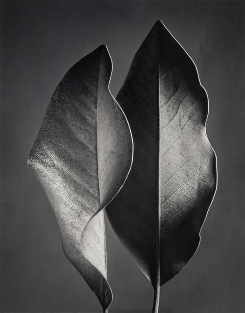 Ruth Bernhard, 'Two Leaves', 1952-printed later, Heritage Auctions