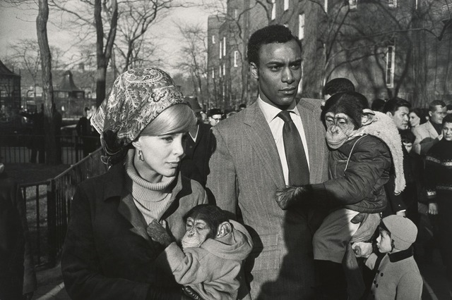 , 'Central Park Zoo, New York,' 1967, Jeu de Paume