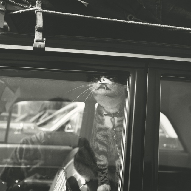 , '131533 - Chicago area, August 1966, Self-Portrait Cat in Car Window,' Printed 2017, KP Projects