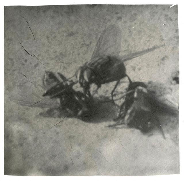 , 'Three Flies,' 2015, Blindspot Gallery