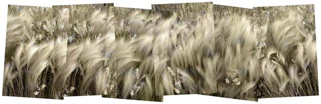 , 'June Grass,' 2015, J GO Gallery