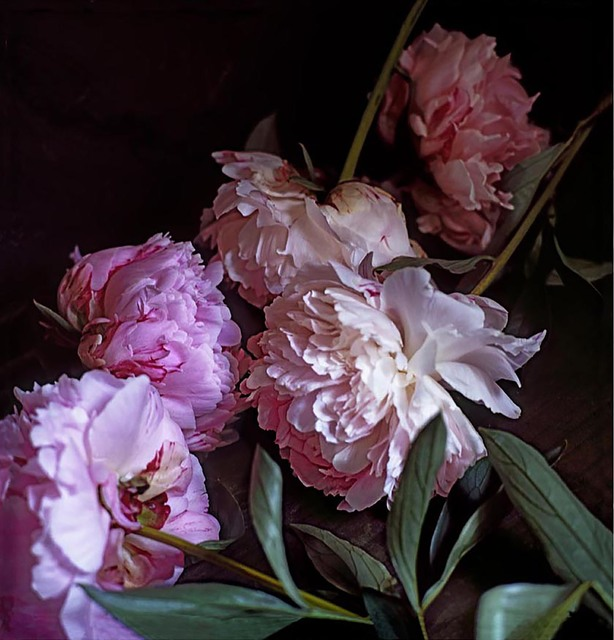 , 'Five Peonies. via Chiatamone, Naples. May 2010,' 2014, Alfonso Artiaco
