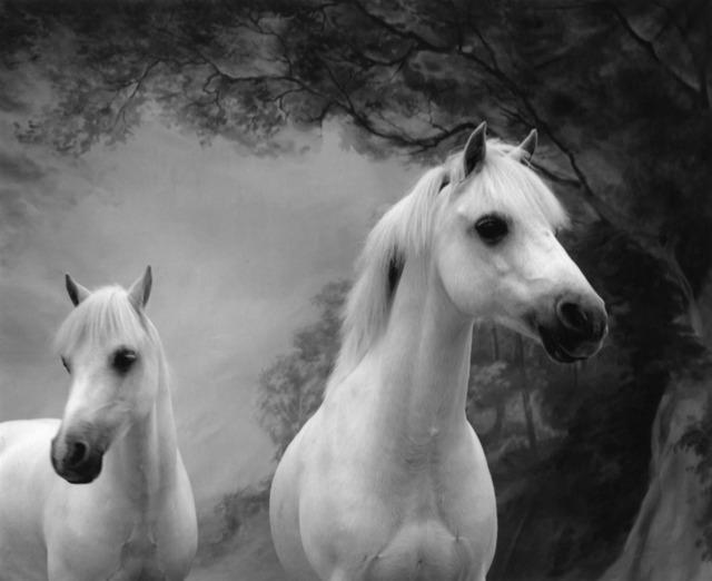 Sheila Rock, 'Horse #58', ca. 1999, Photography, Silver Gelatin print, ElliottHalls