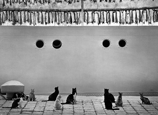 Pentti Sammallahti, 'Islanti, Iceland (Cats, Fish on Ship)', 1980, photo-eye Gallery