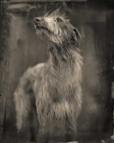 , 'Bog Dog,' 2014, PDNB Gallery