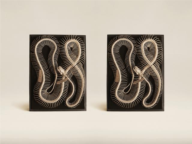 , 'Diamond Python (Morelia Spilota),' 2015, KLOMPCHING GALLERY